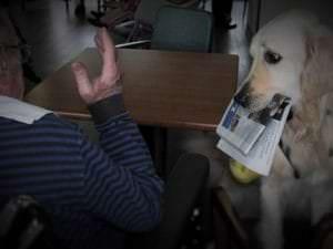Hamlet, le chien soignant