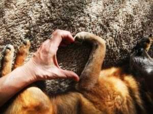 Un chien de compagnie pour améliorer le bien-être des personnes âgées