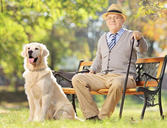 Quand un labrador vient animer la maison de retraite